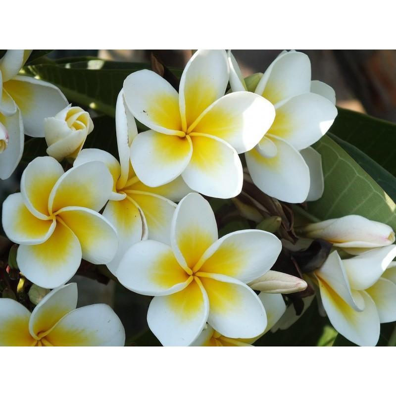 """SPA RITUĀLS """" Ziedu aromāts """" !"""